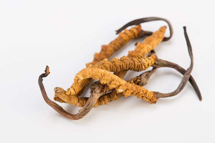 Cordyceps medicinska gljiva