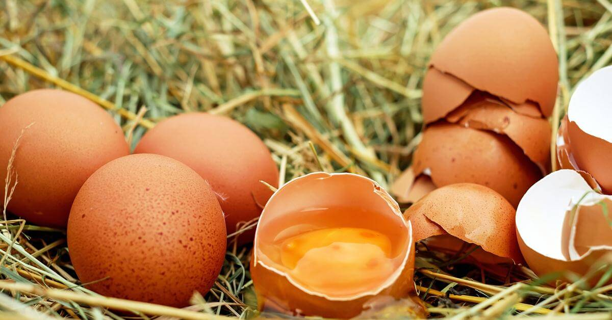 dijeta sa jajima i narandžama