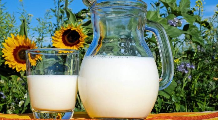 Mleko i suncokret